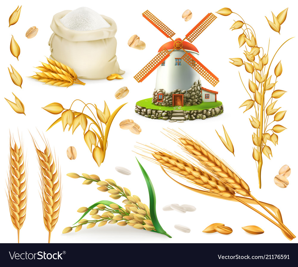 Wheat rice oats barley flour mill grain 3d