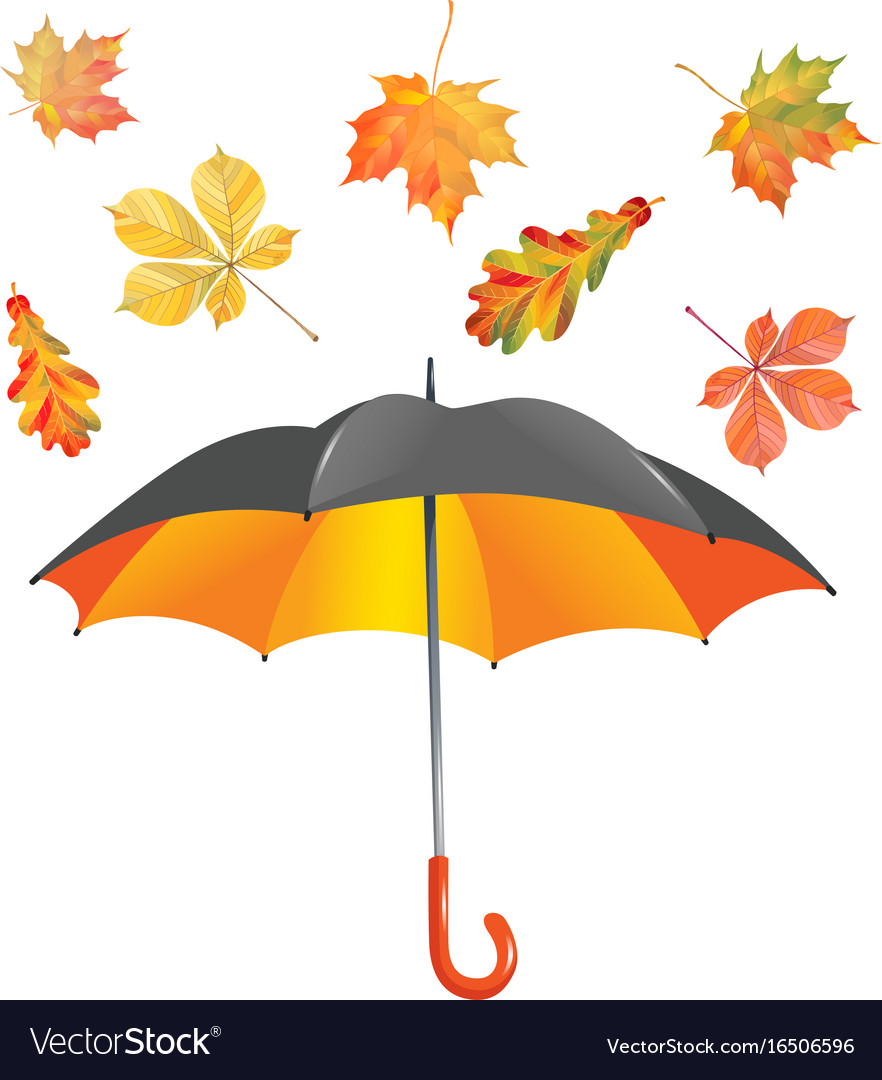 Open umbrella and leaf fall isolated on white