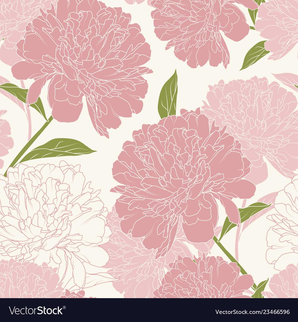 Pink peony rose flowers elegant beautiful