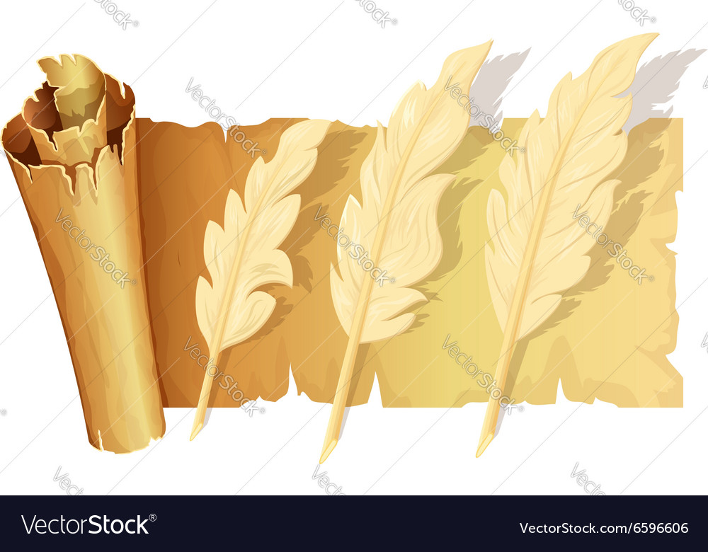 Set of goose feather vector image