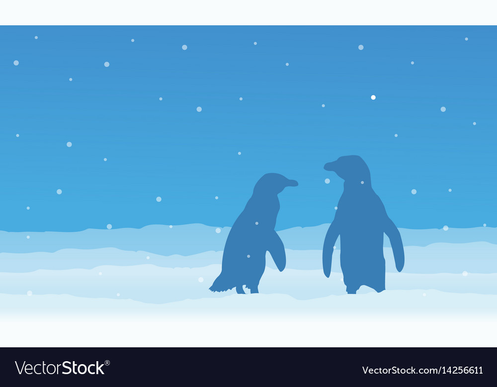 Silhouette of penguin on snow at night vector image