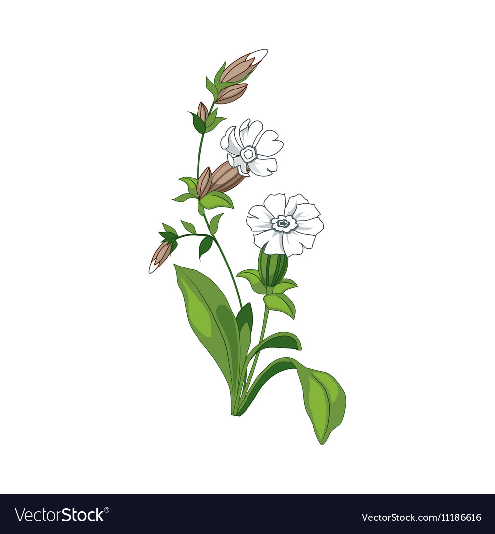 White marigold wild flower hand drawn detailed vector image mightylinksfo