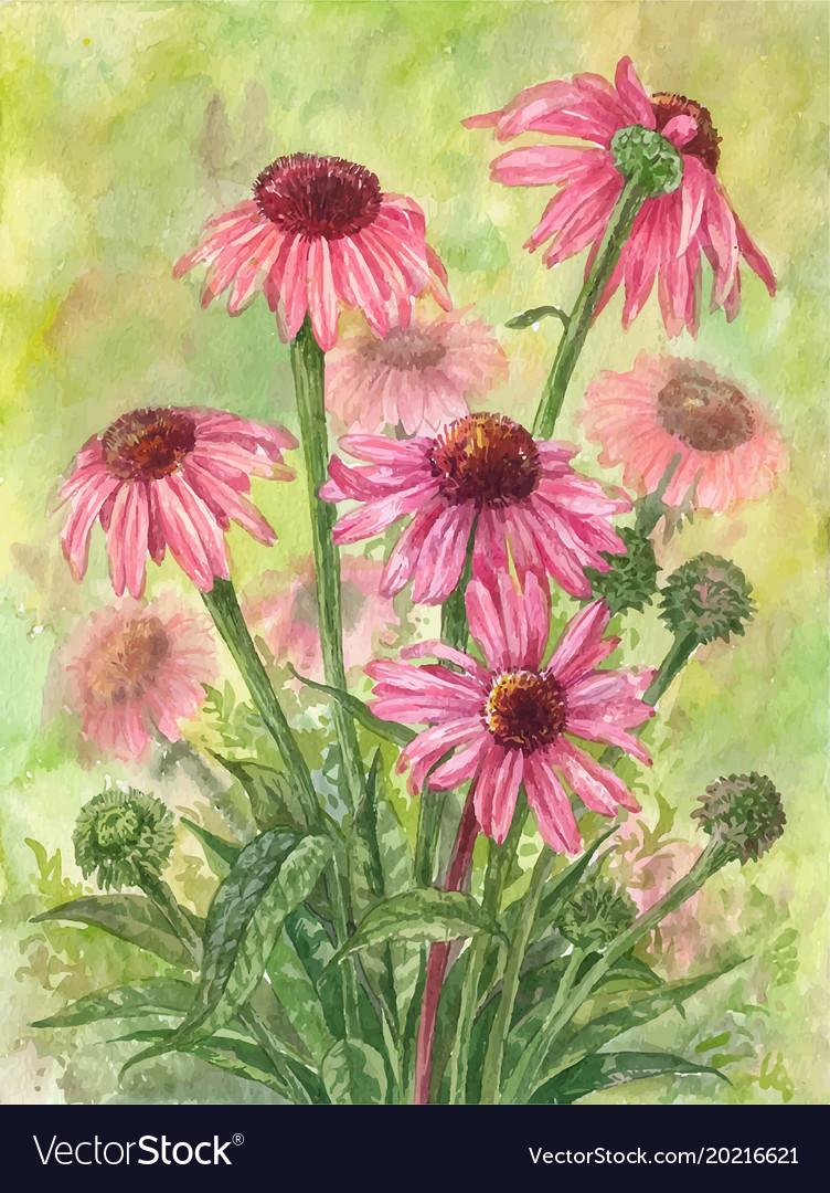 Watercolor echinacea bouquet