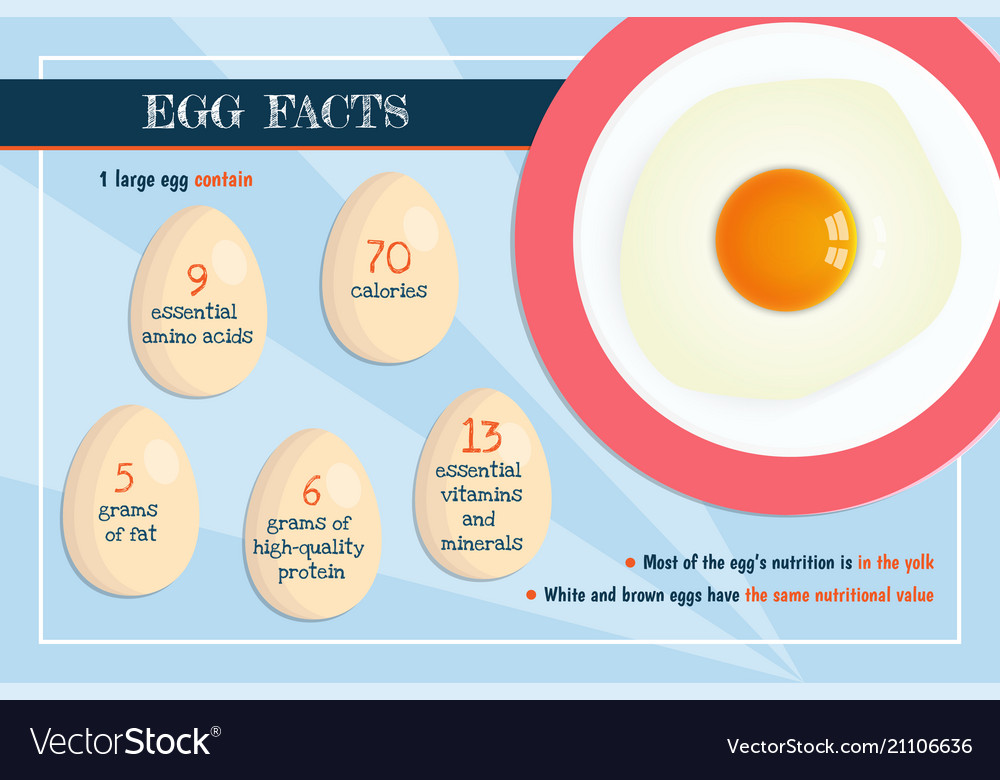 Banner with realistic raw egg nutrition vector image