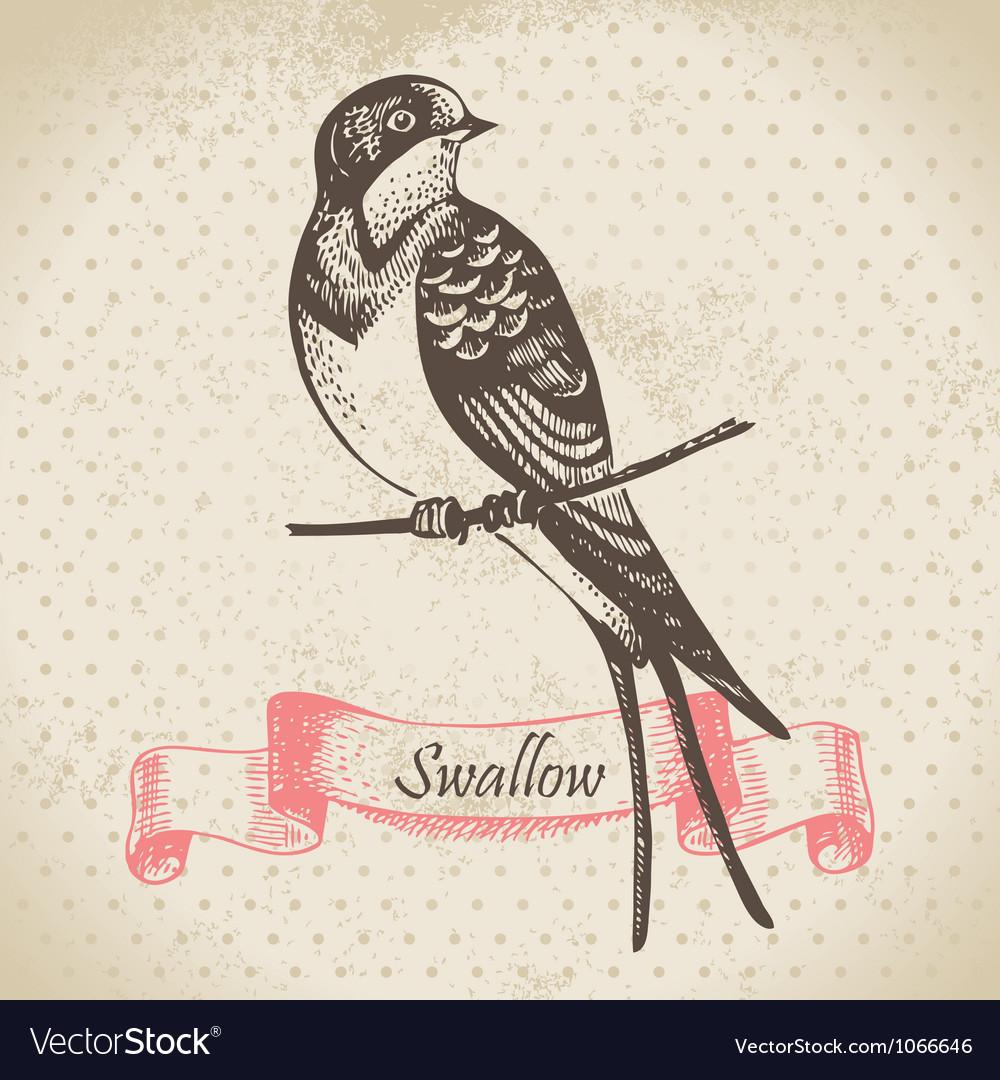 Swallow bird hand-drawn