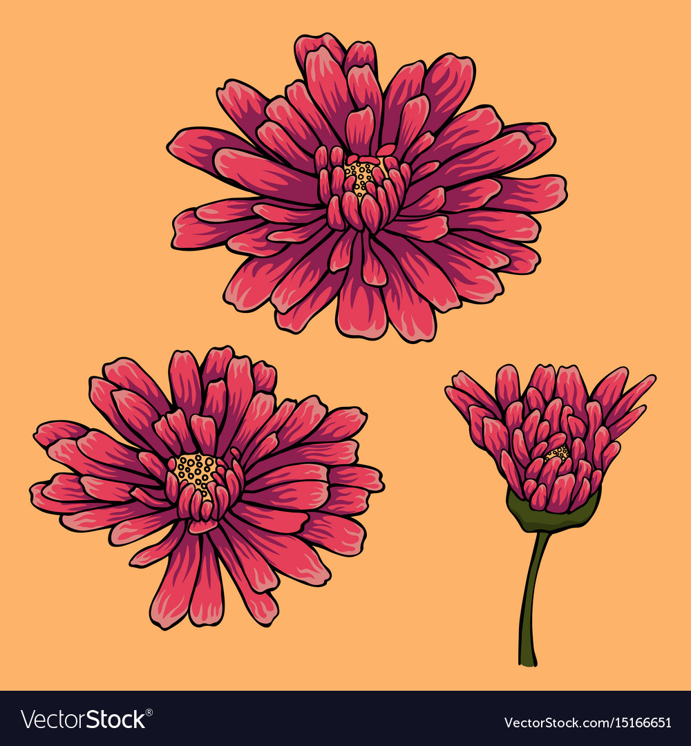 Flower set with three violet flowers vector image