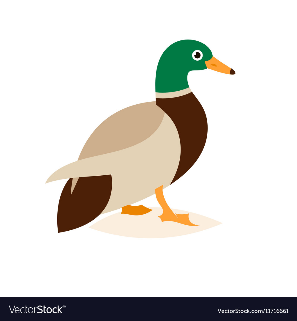 Beautiful duck in a flat style