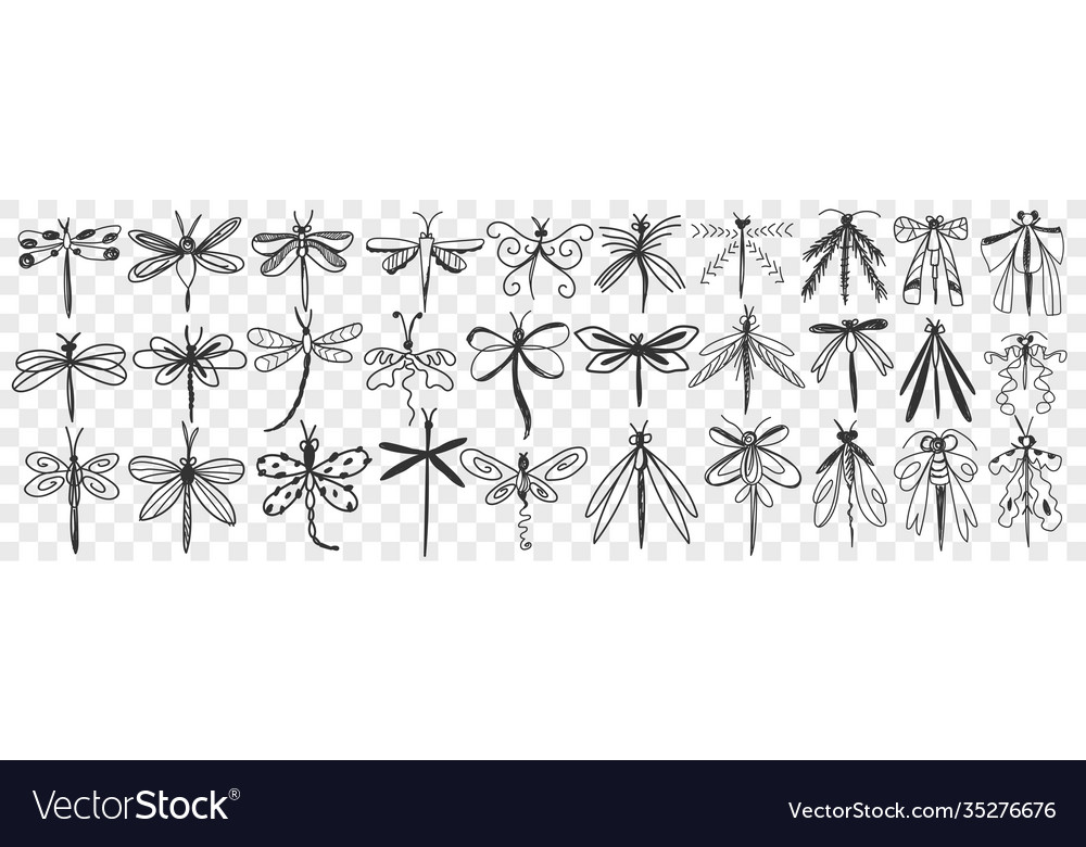Dragonfly hand drawn doodle set