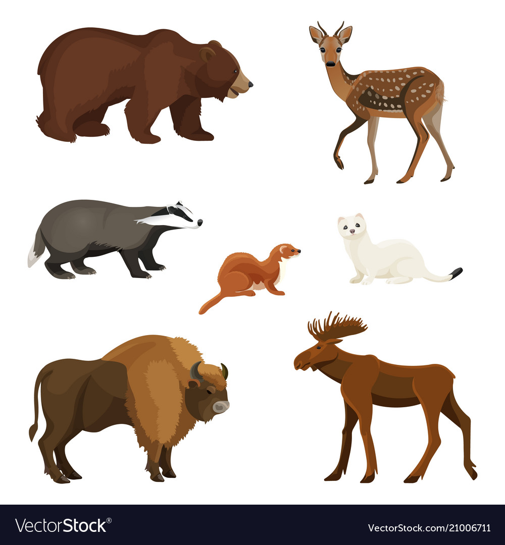 Forest animals with fluffy fur predators and