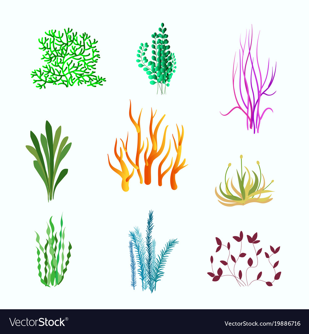 Set Of Underwater Plants Underwater Plant Vector Image