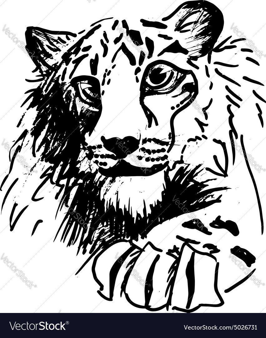 Hatching tiger vector image