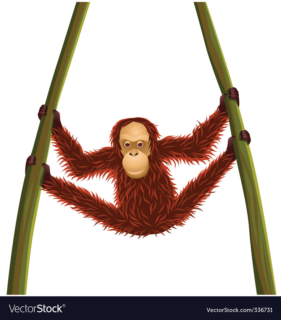 Orangutan cartoon vector image
