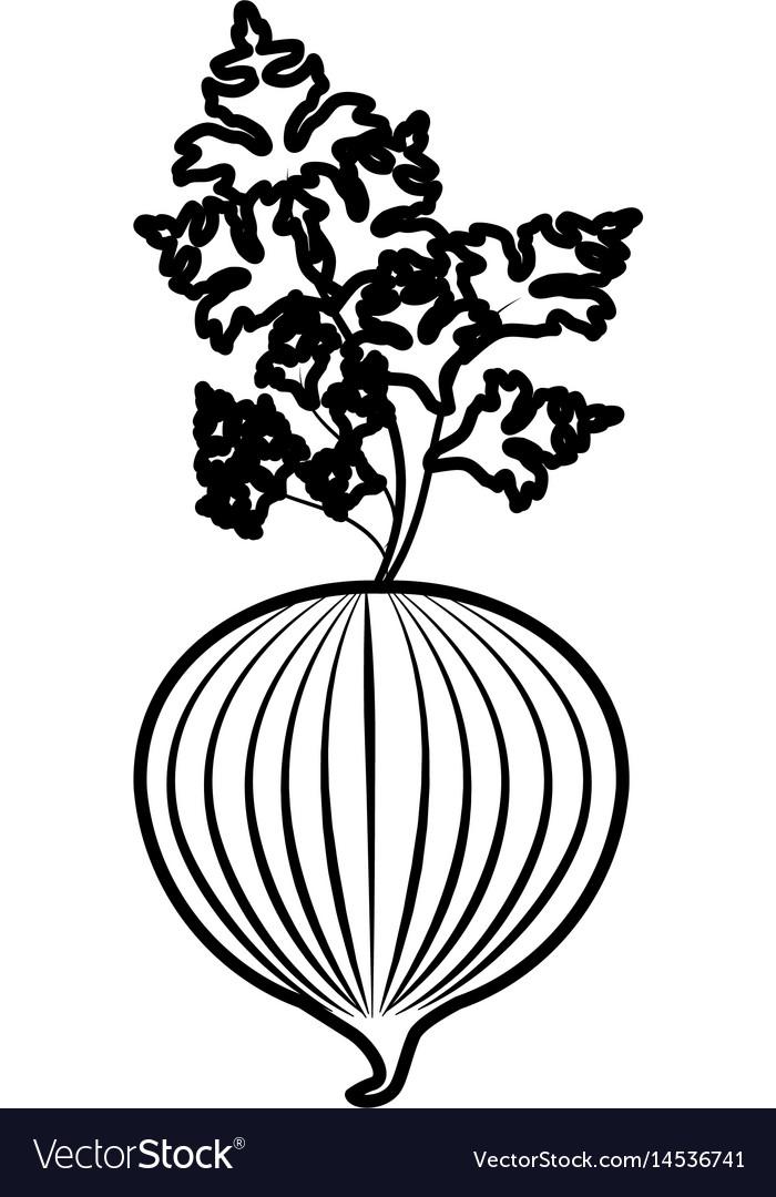 Fgure fresh onion with plant organ food