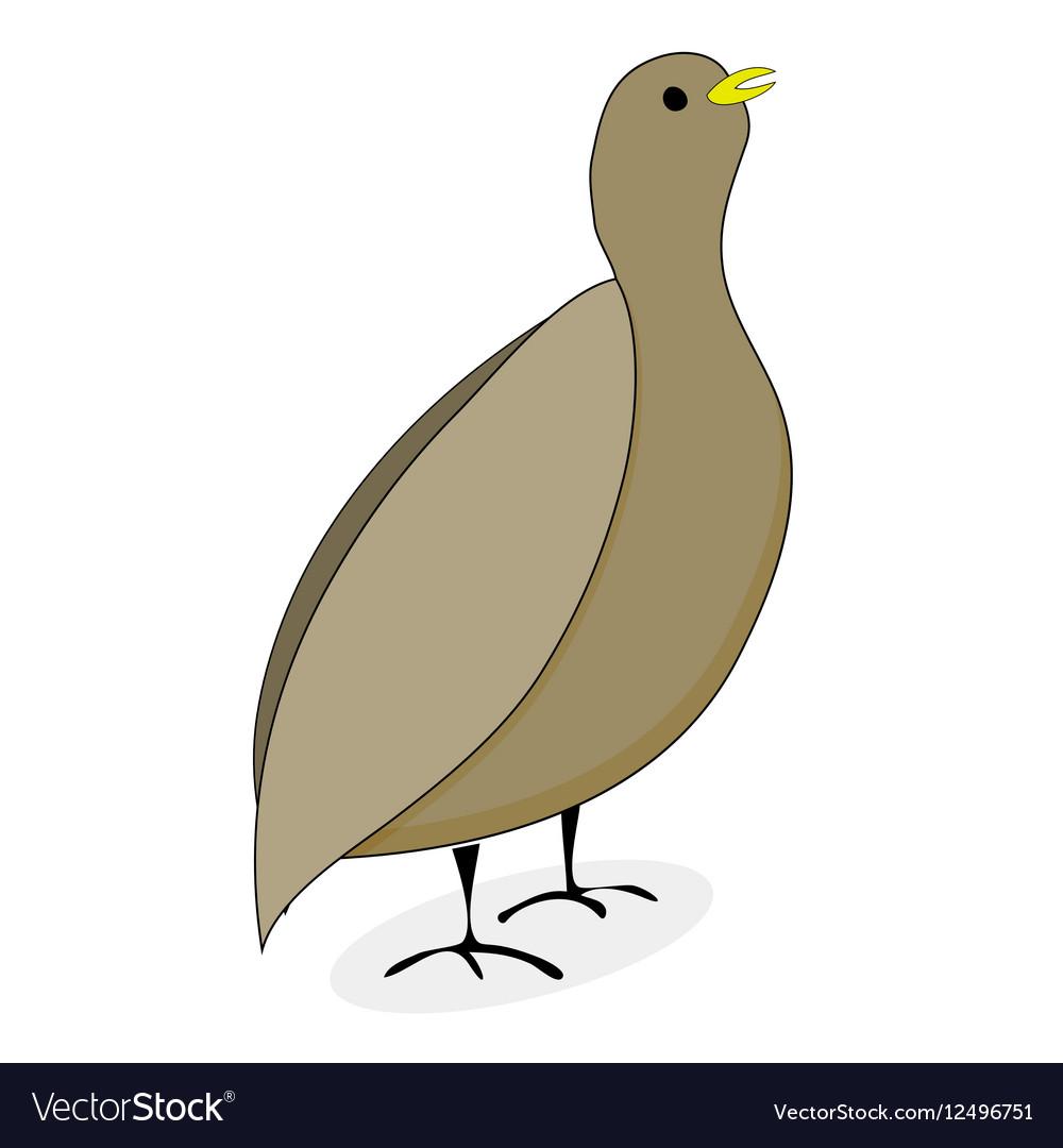 Quail bird character