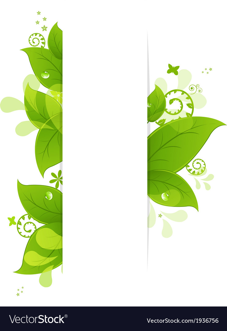 Natural Background With Leaves And Drops vector image