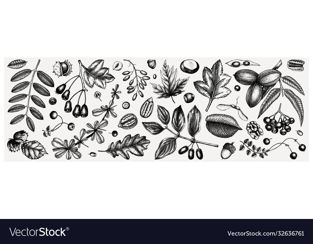 Autumn botanical set collection hand sketched