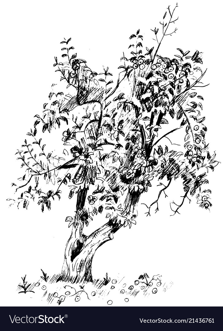 Image of pear tree with branches and fruits
