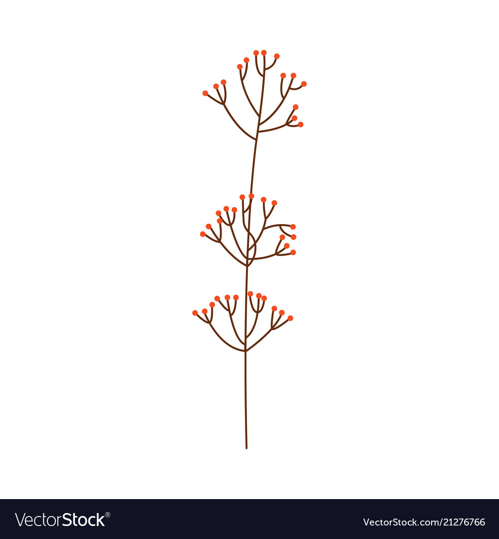Branch of red berries or leaves isolated on white
