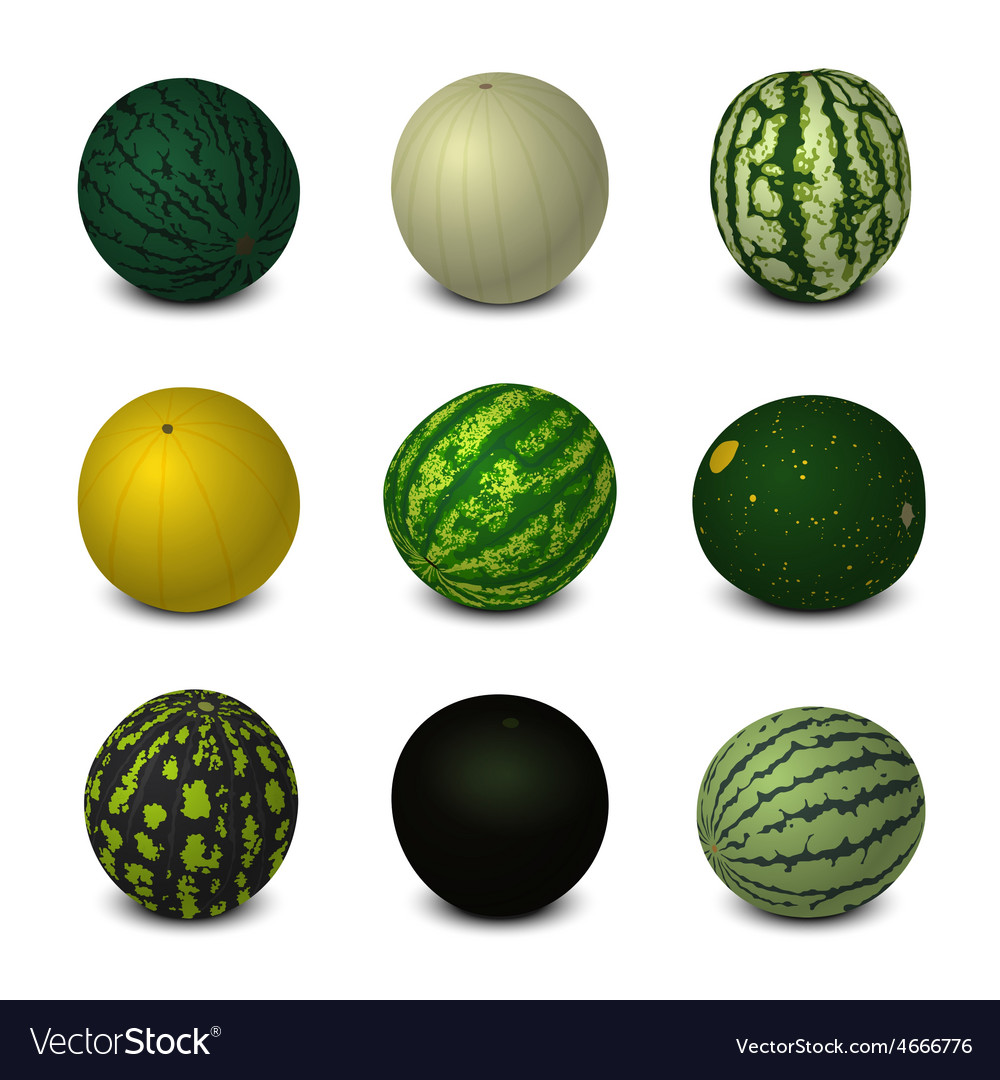 Different Varieties of Watermelons vector image