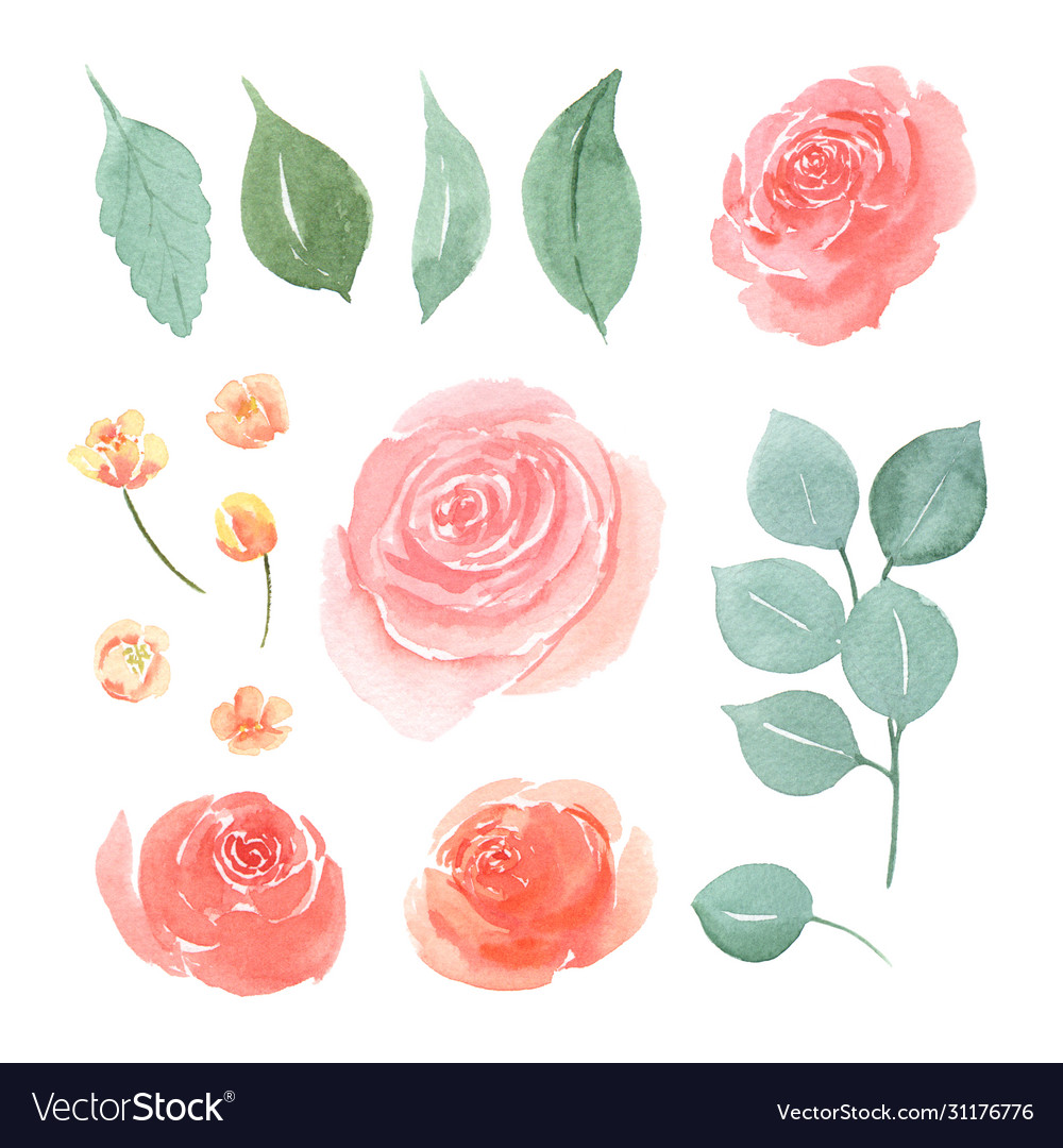 Floral and leaves watercolor elements set hand