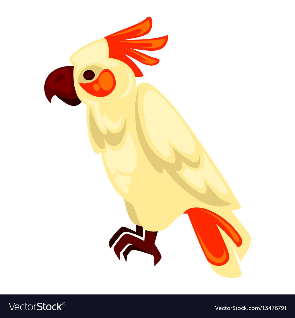 Parrot macaw with orange and beige feathers on