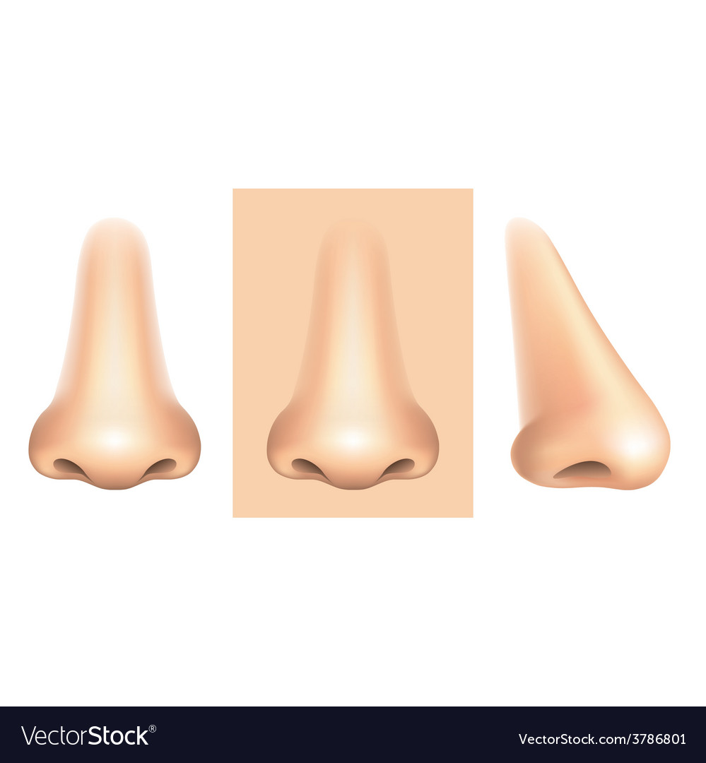 Nose isolated