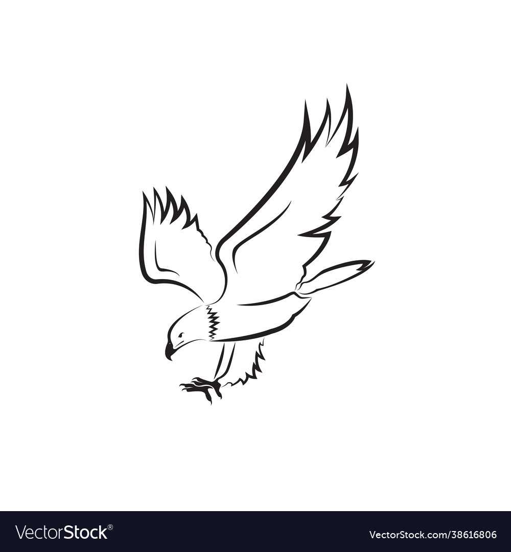 Eagle design on white background bird wild