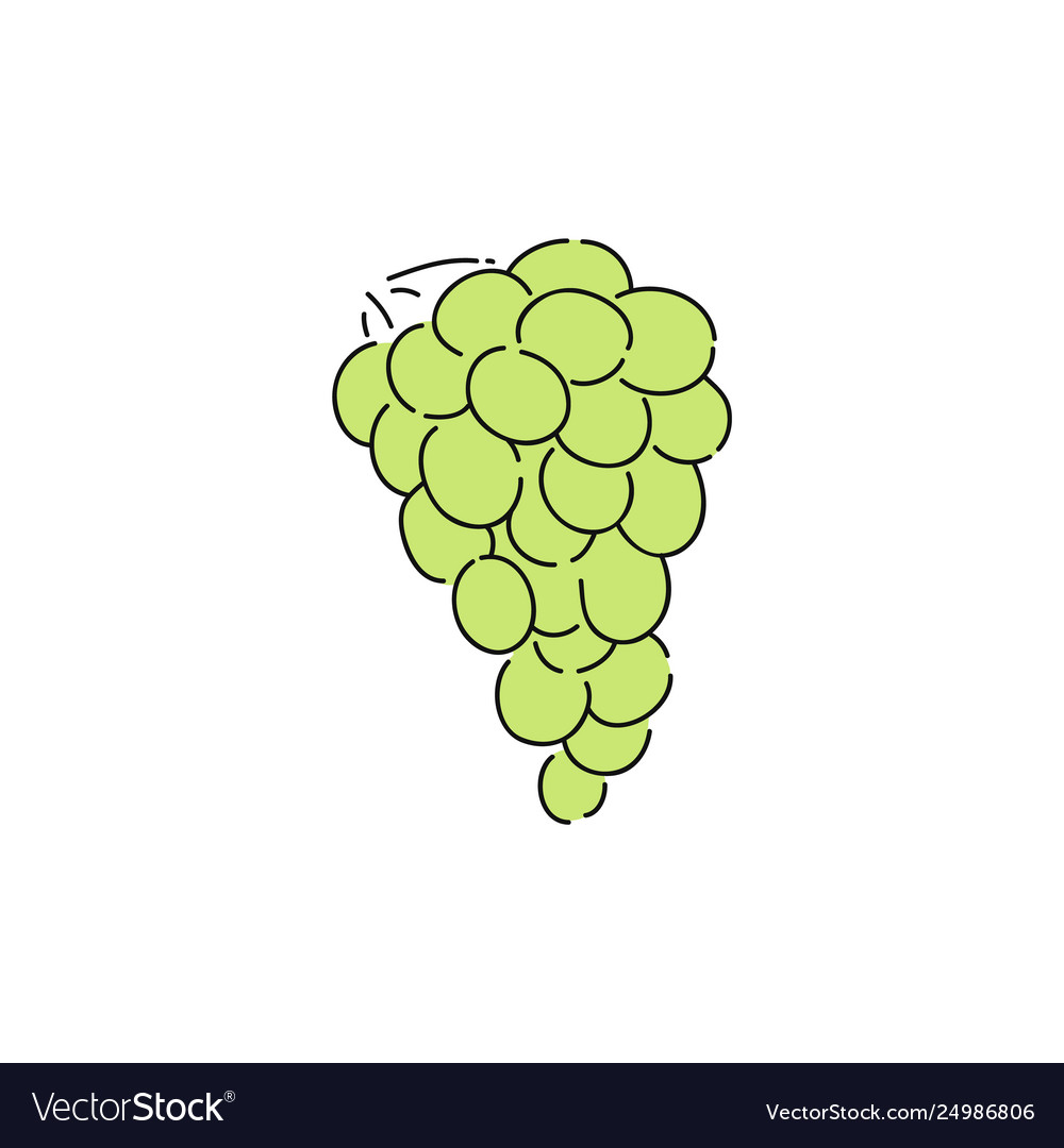 Fresh green grapes in vine simple drawing