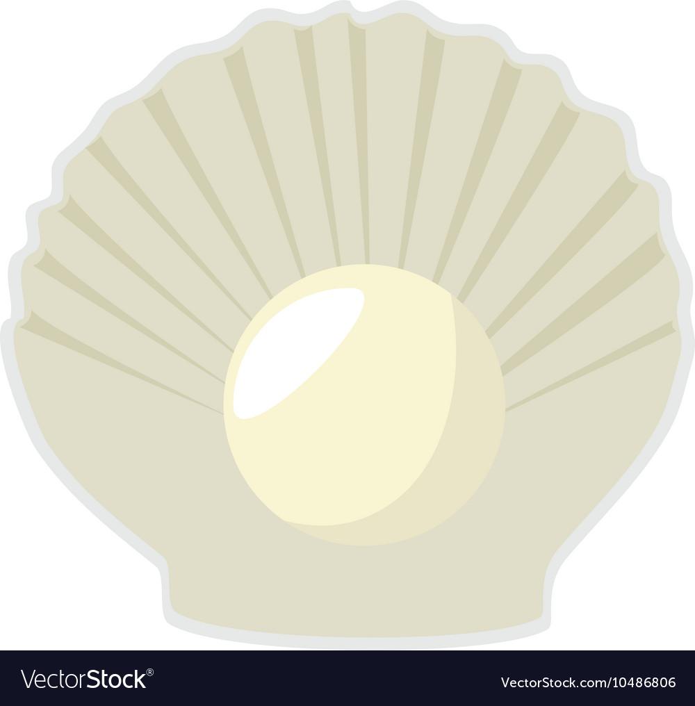 Sea shell mollusks vector image