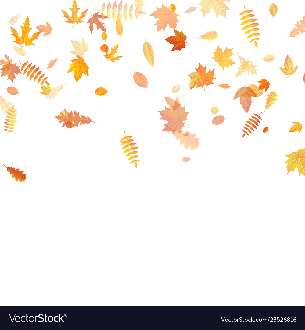 Autumn background with golden maple oak and