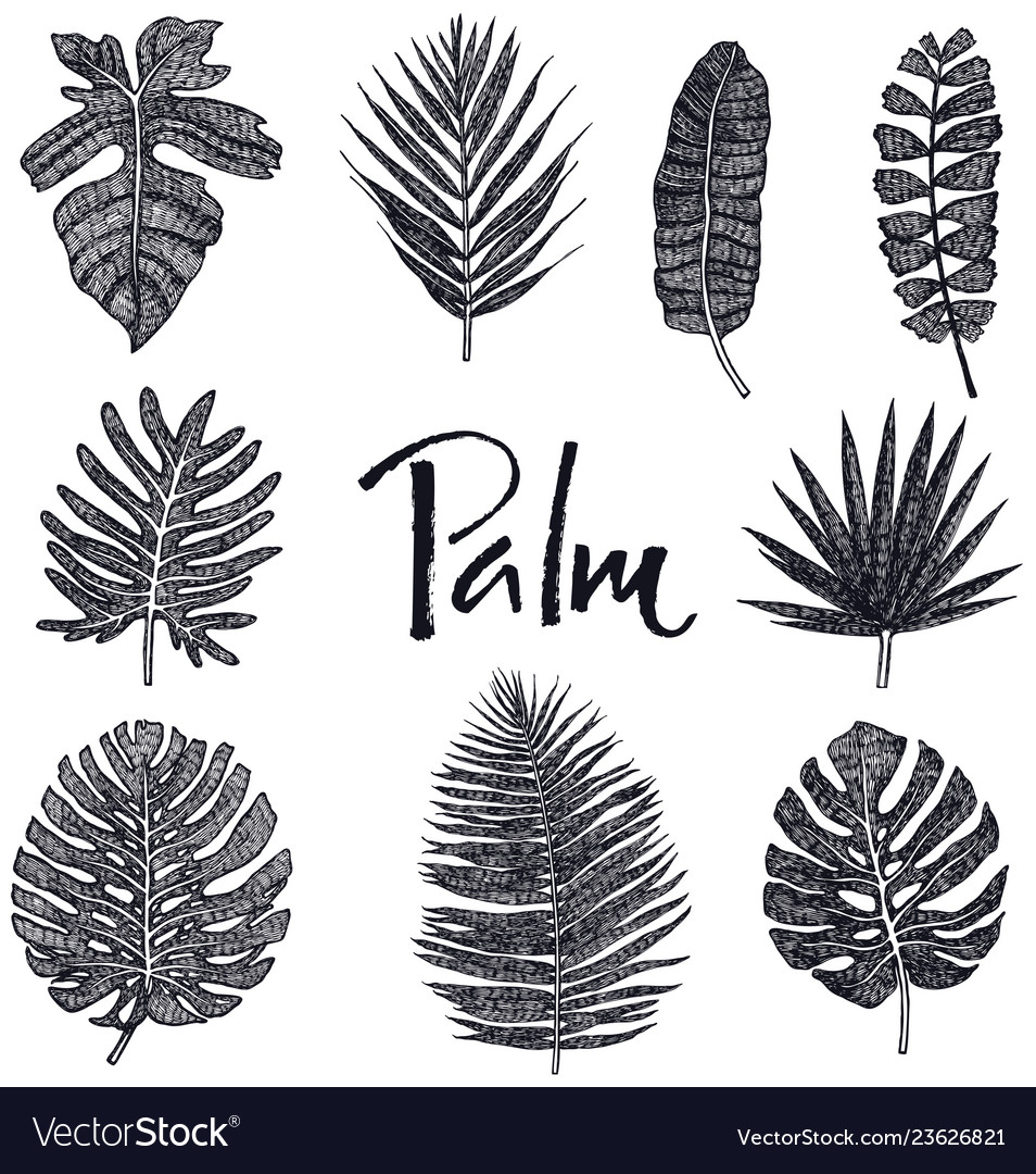 Black palm leaves hand drawing isolated object