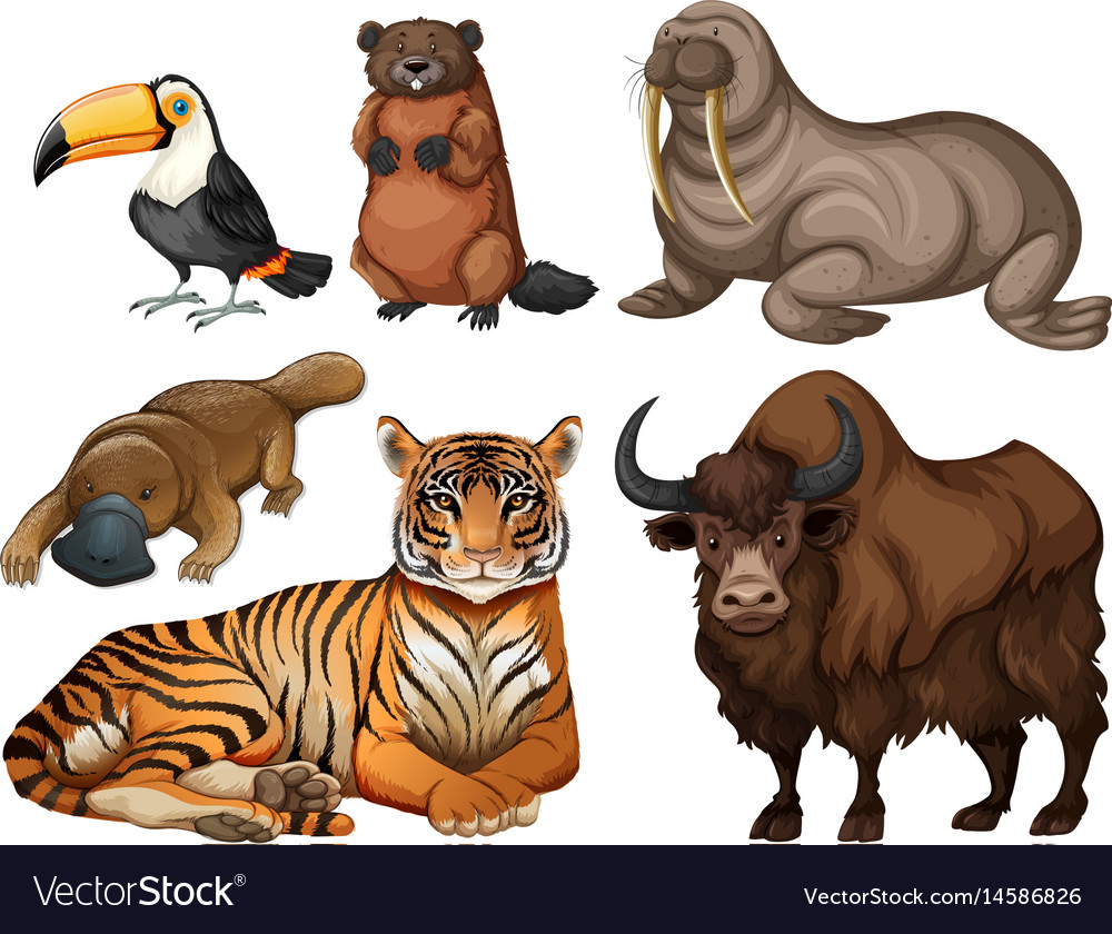 Different kinds of wild animals Royalty Free Vector Image