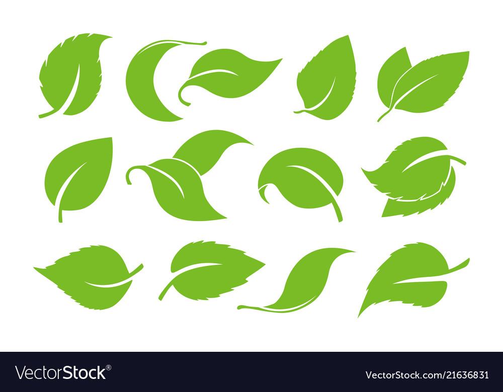Leaves icon set isolated on white