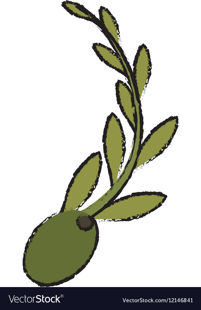 Olive and branch icon image