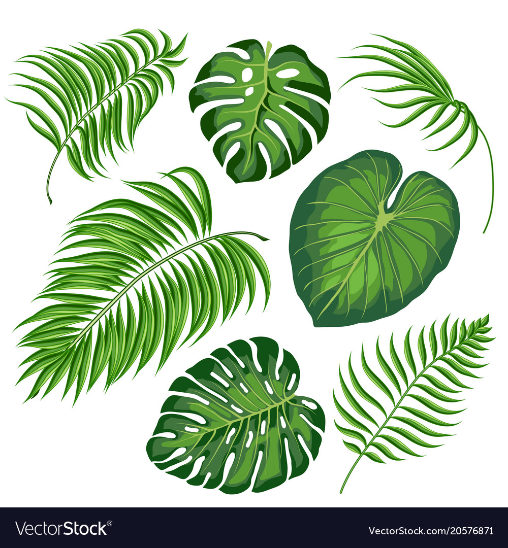 Leaves Tropical Plants Royalty Free Vector Image