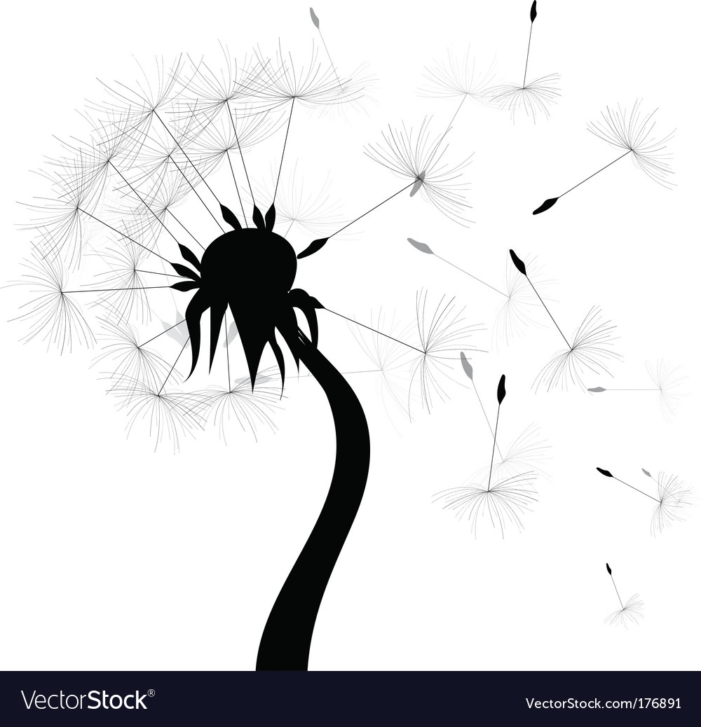 Windy dandelion vector image
