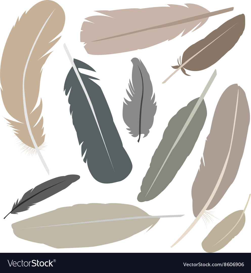 Collection of isolated flat style bird feathers