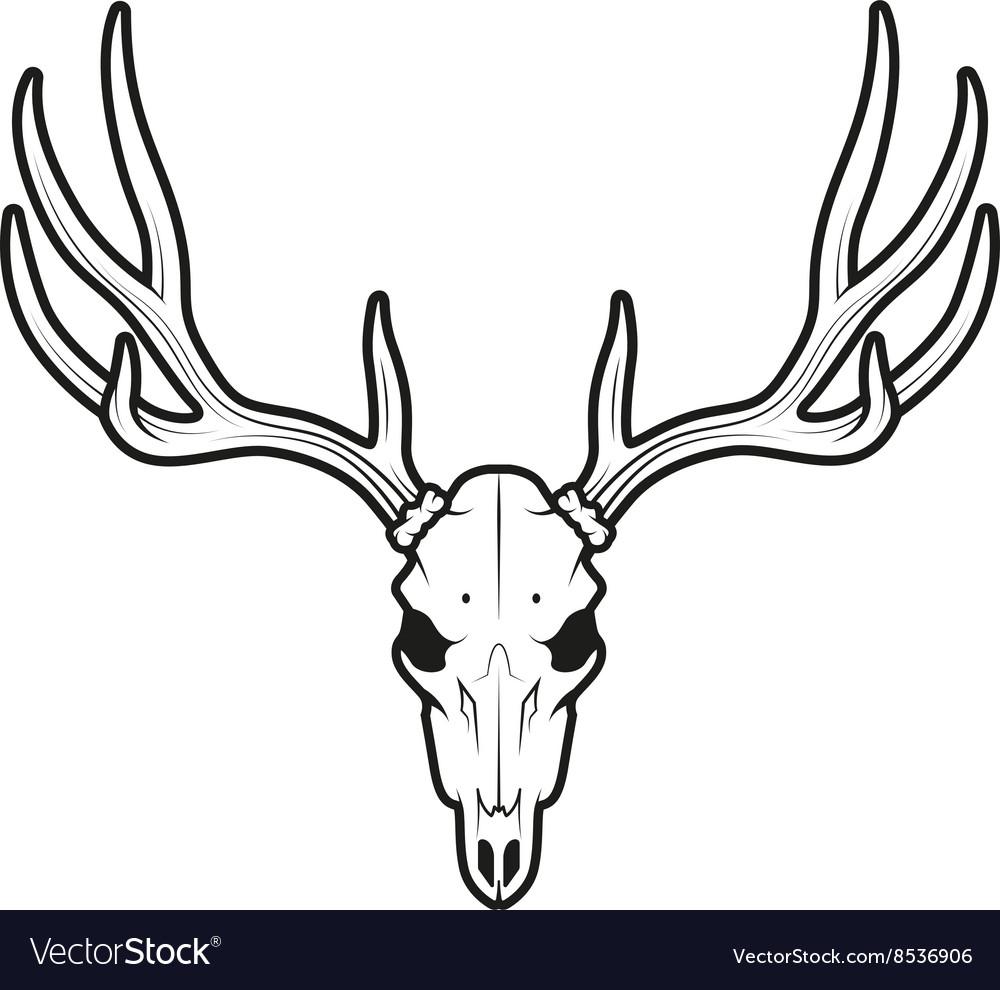 White tail deer skull vector image