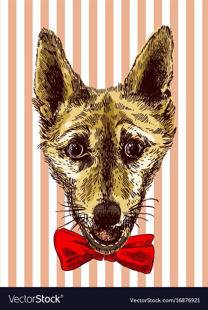 Bulldog sketch style dog symbol of vector image