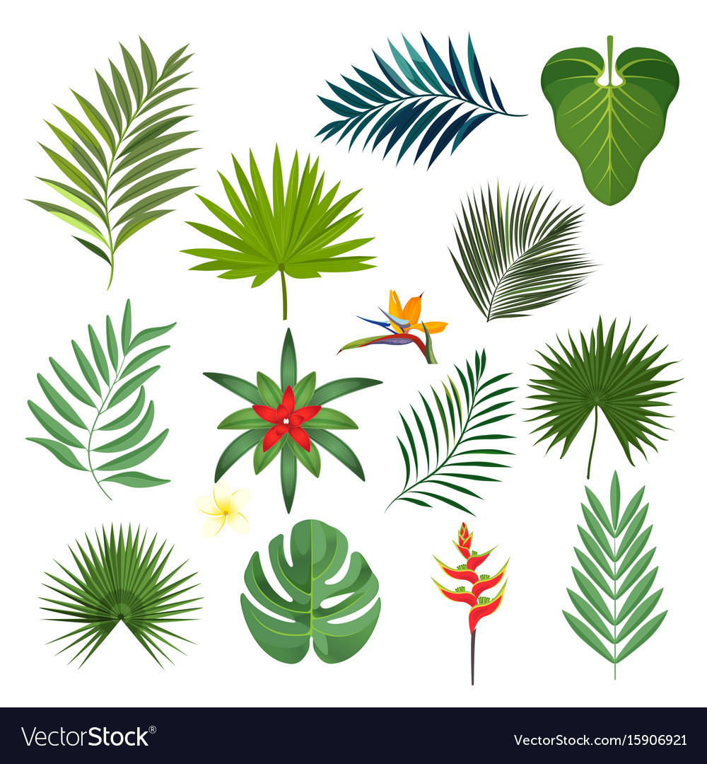 Set of exotic tropical leaves isolated