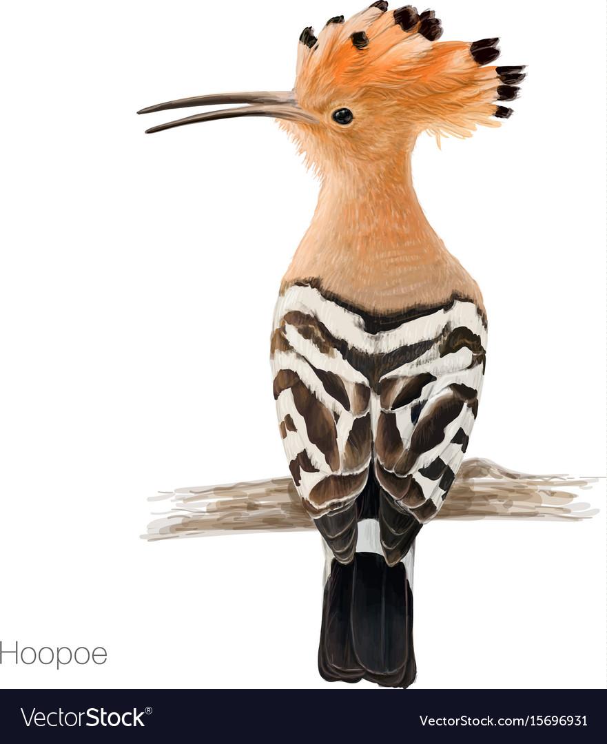Hoopoe bird vector image