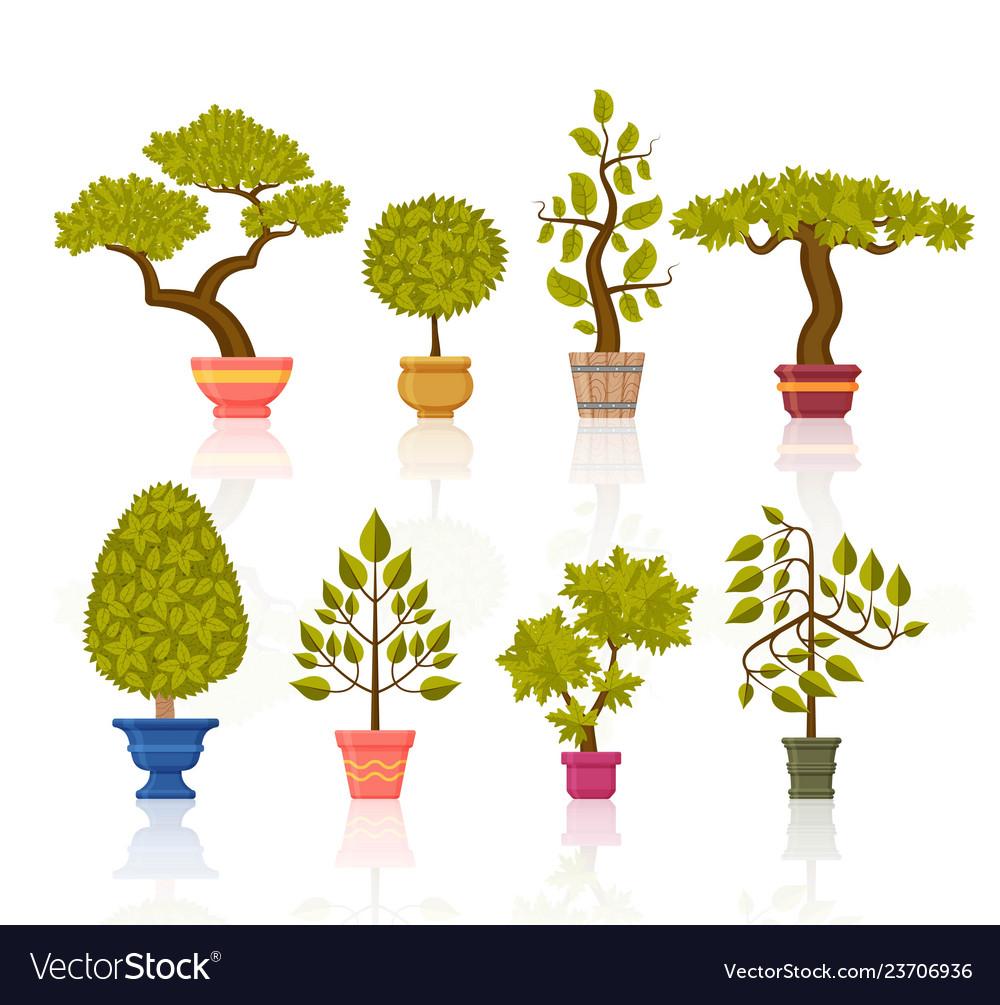 Bonsai tree set decorative plants in flower pots