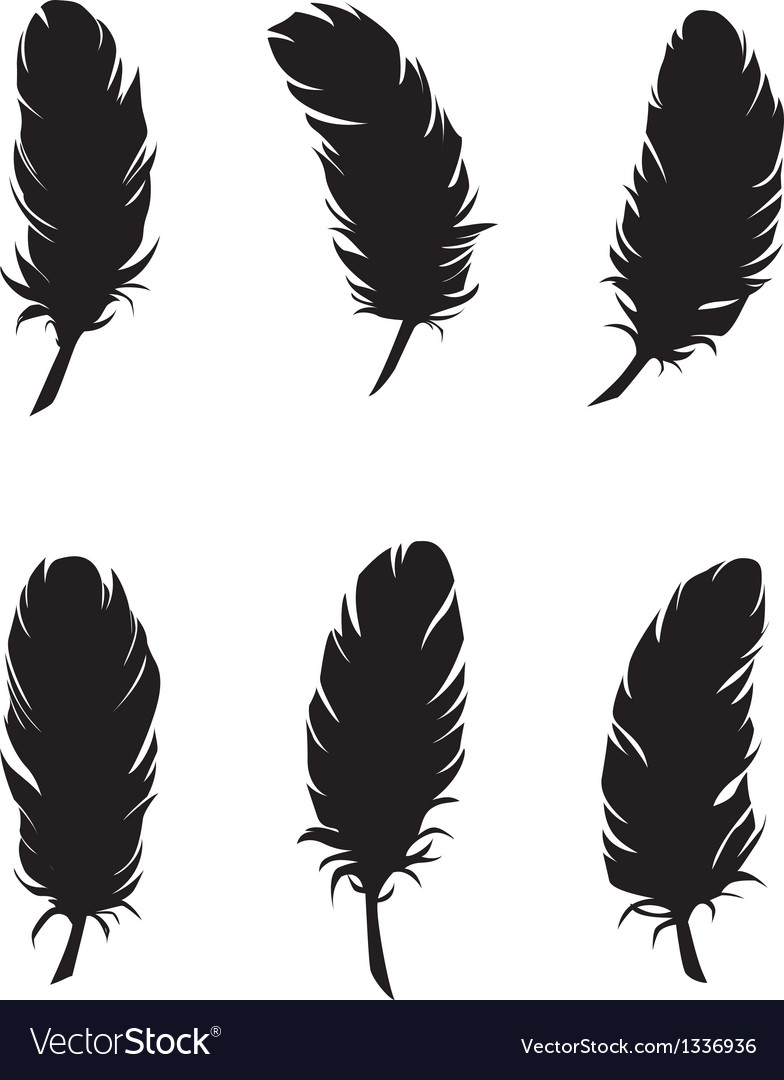 Feathers for design and decoration