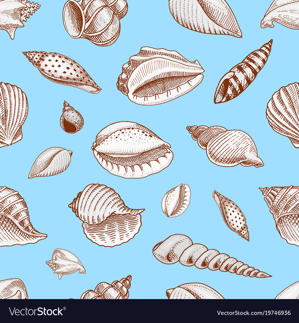 Seamless pattern shells or mollusca different