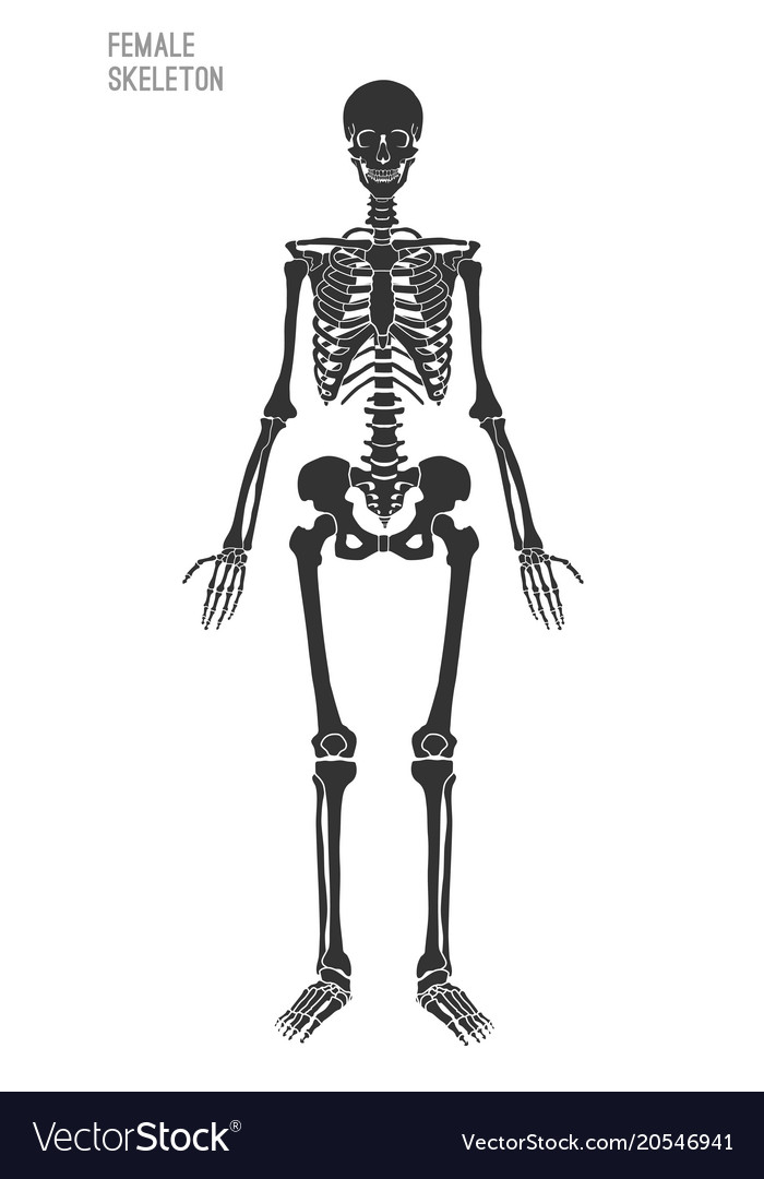 Female skeleton image