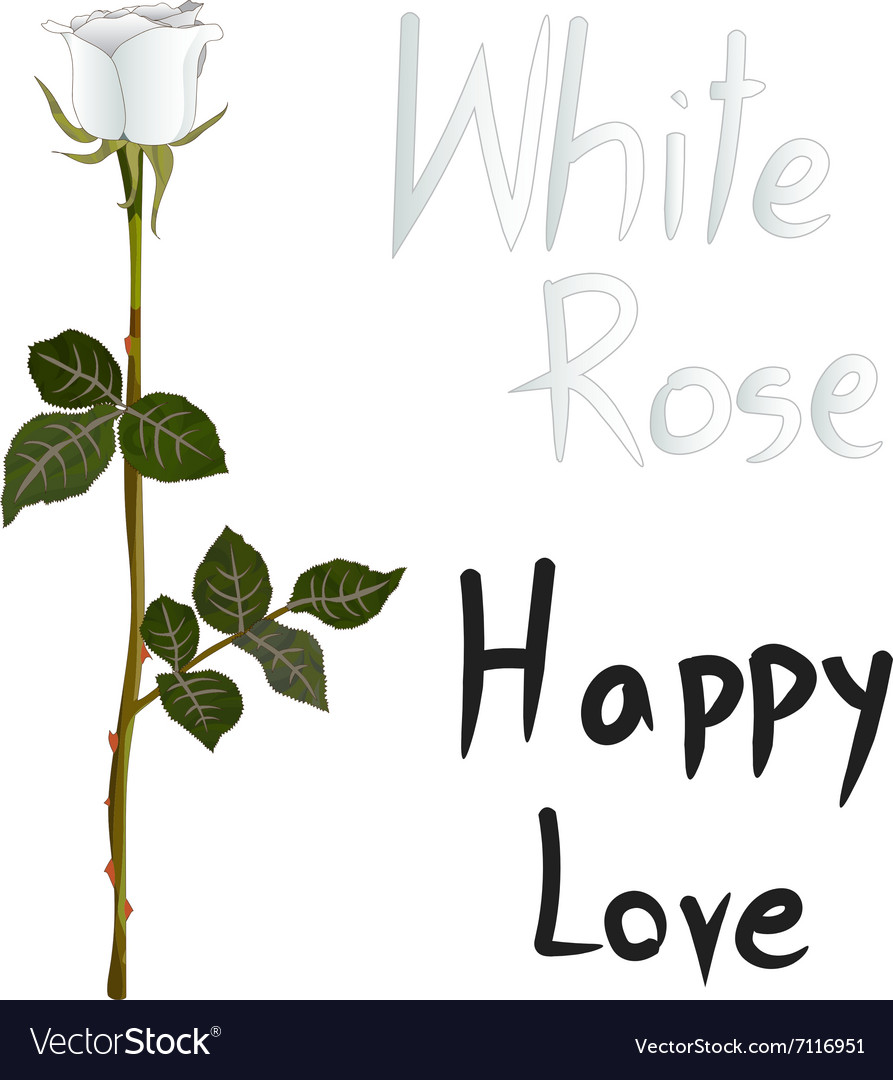 White Rose Meaning Royalty Free Vector Image Vectorstock