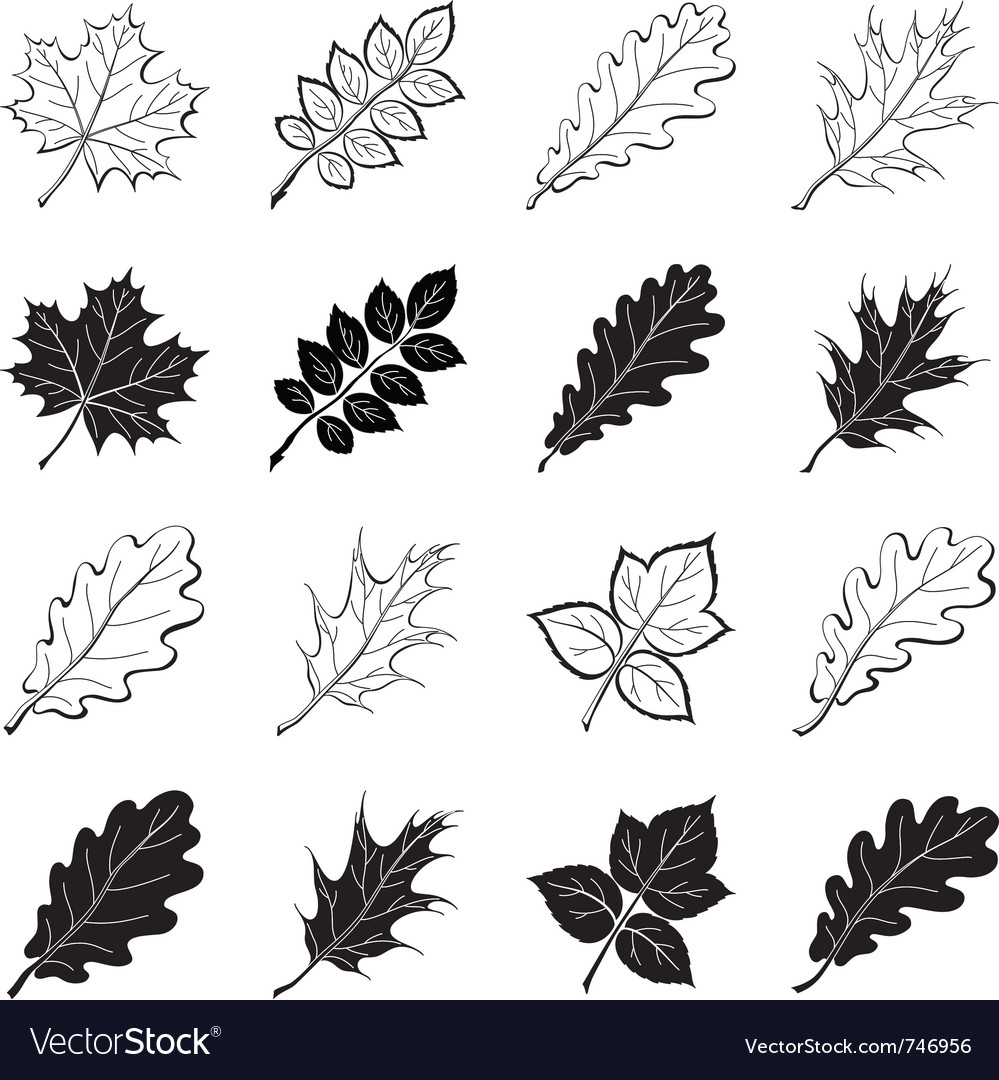Leaves of plants silhouettes set