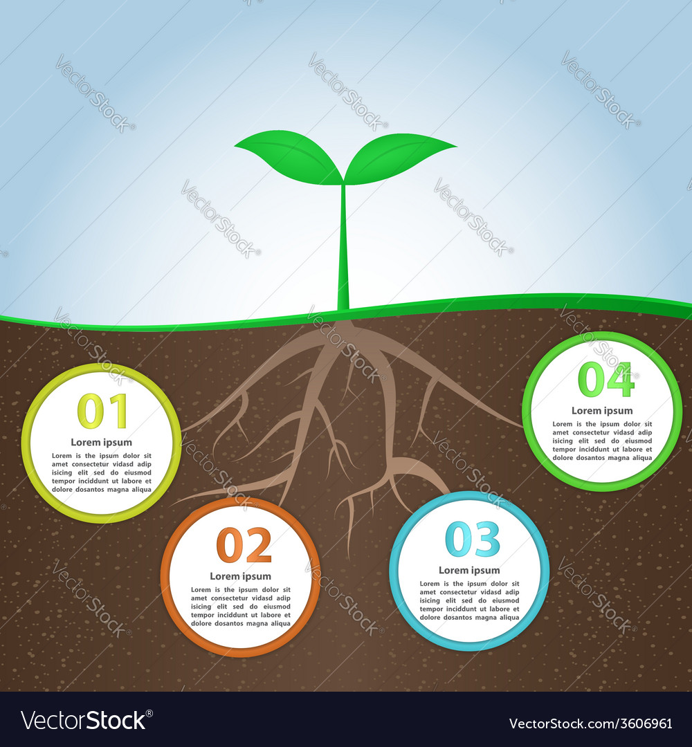 Plant And Root Infographic Background Design Templ