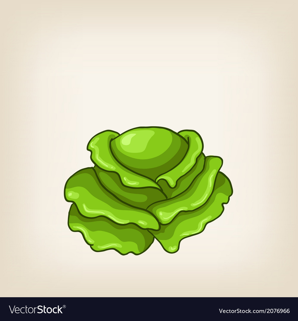Cute green hand drawn cabbage