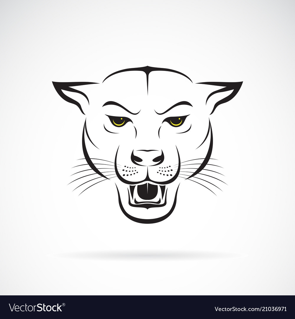 An angry panther head on white background wild